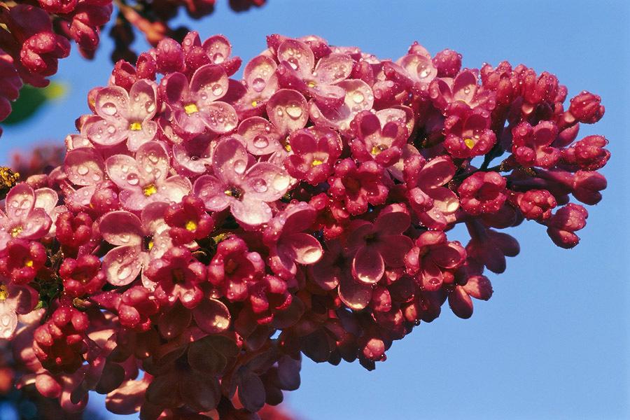Синие цветы названия и фото